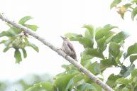 aves-valle-chirripo-18