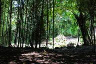 Hotel-Roca-dura-bambu