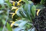 j-orquideas-37_mini