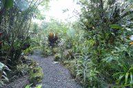 jardin-orquideas-valle-chirripo-16