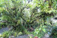 jardin-orquideas-valle-chirripo-3