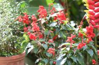 jardin-orquideas-valle-chirripo-4