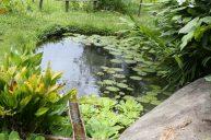 jardines-secretos-valle-chirripo-21