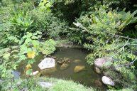 jardines-secretos-valle-chirripo-36