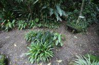 jardines-secretos-valle-chirripo-7