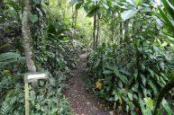 jardines-secretos-valle-chirripo-9