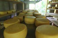 quesos-canaan-valle-del-chirripo-26
