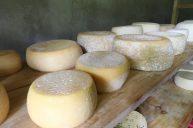 quesos-canaan-valle-del-chirripo-29