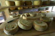 quesos-canaan-valle-del-chirripo-3