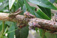 Reserva-Rio-Blanco-Insectos
