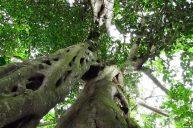 Reserva-Rio_blanco-arboles